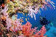 Lặn biển ngắm san hô – trải nghiệm không thể thiếu khi đi du lịch Cát Bà