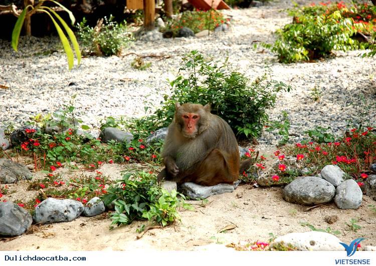 Động vật ở vườn quốc gia cát bà